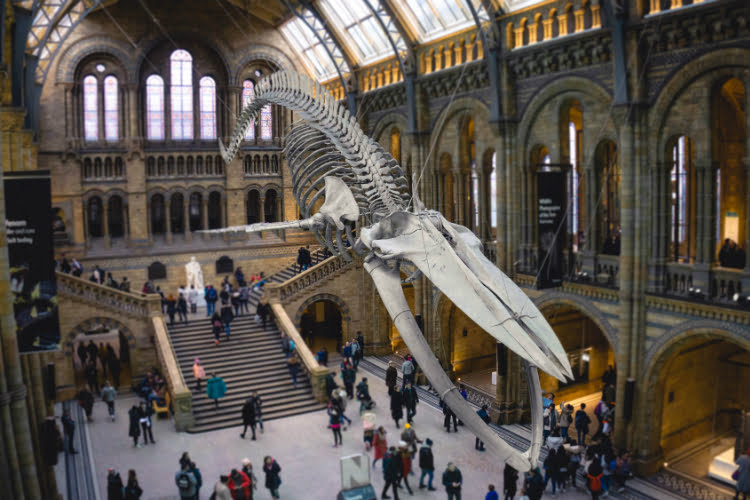 Natural History Museum - best museums in London