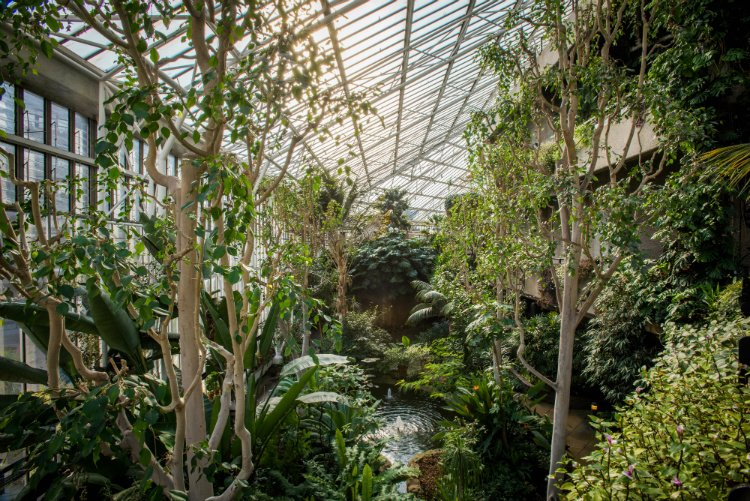 Barbican Conservatory - quirky things to do in London