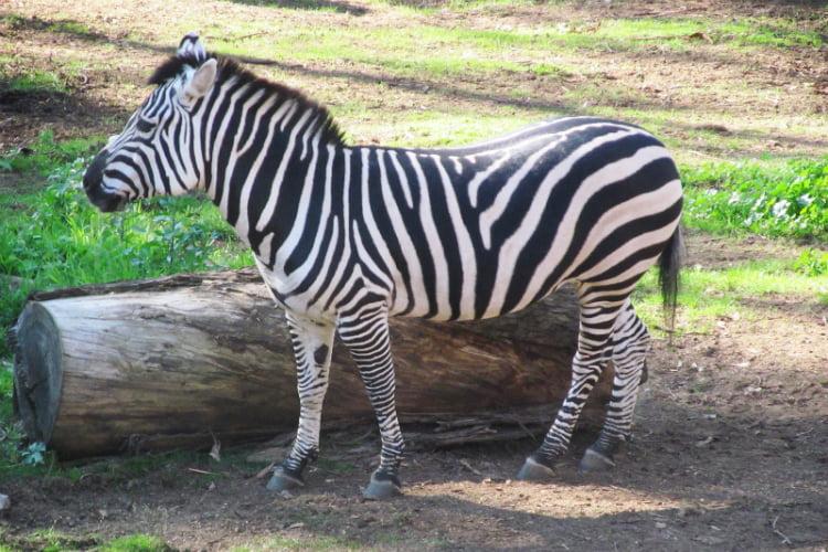 London Zoo - 100 London Date Ideas