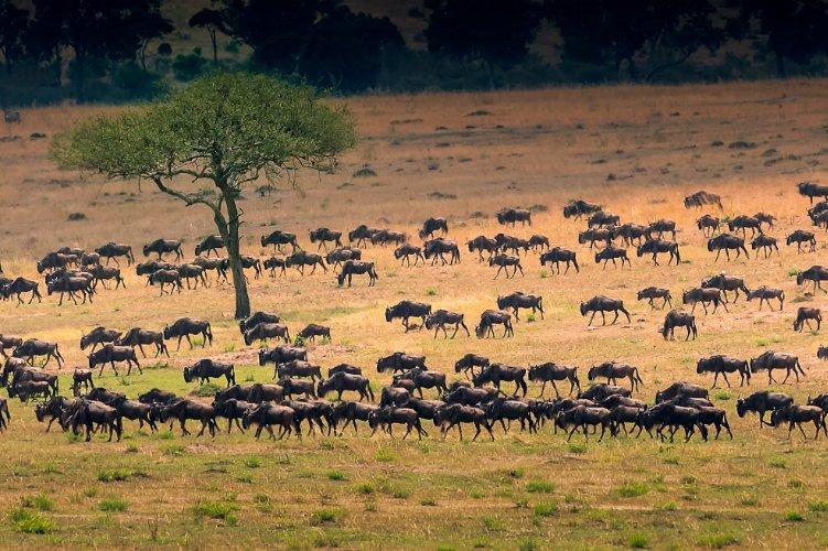 Migration safari - adventure holidays for the brave