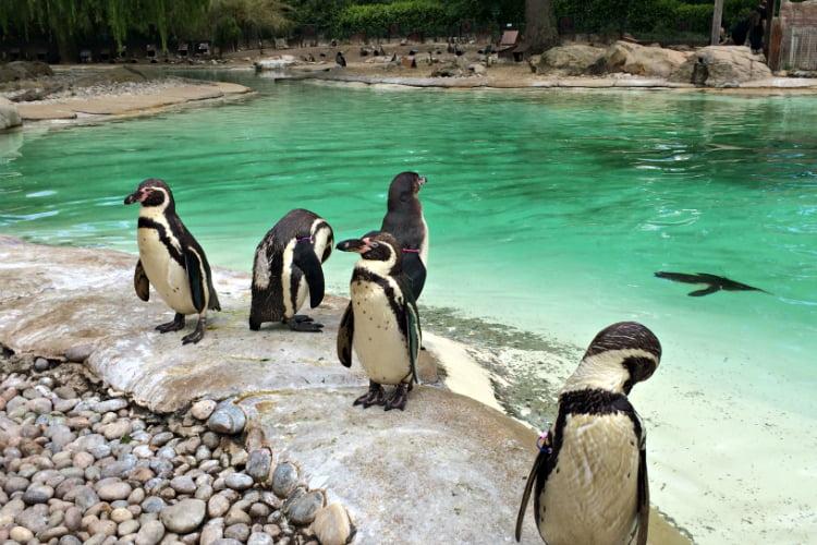ZSL London Zoo Camden Town