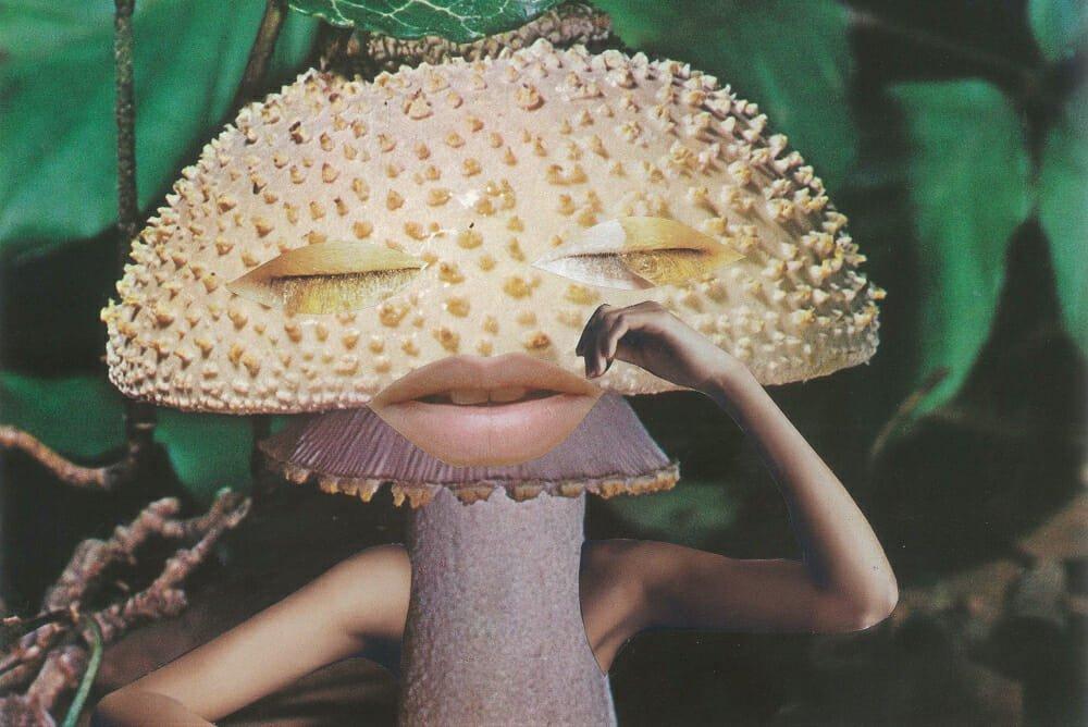 Mushroom exhibition Somerset House