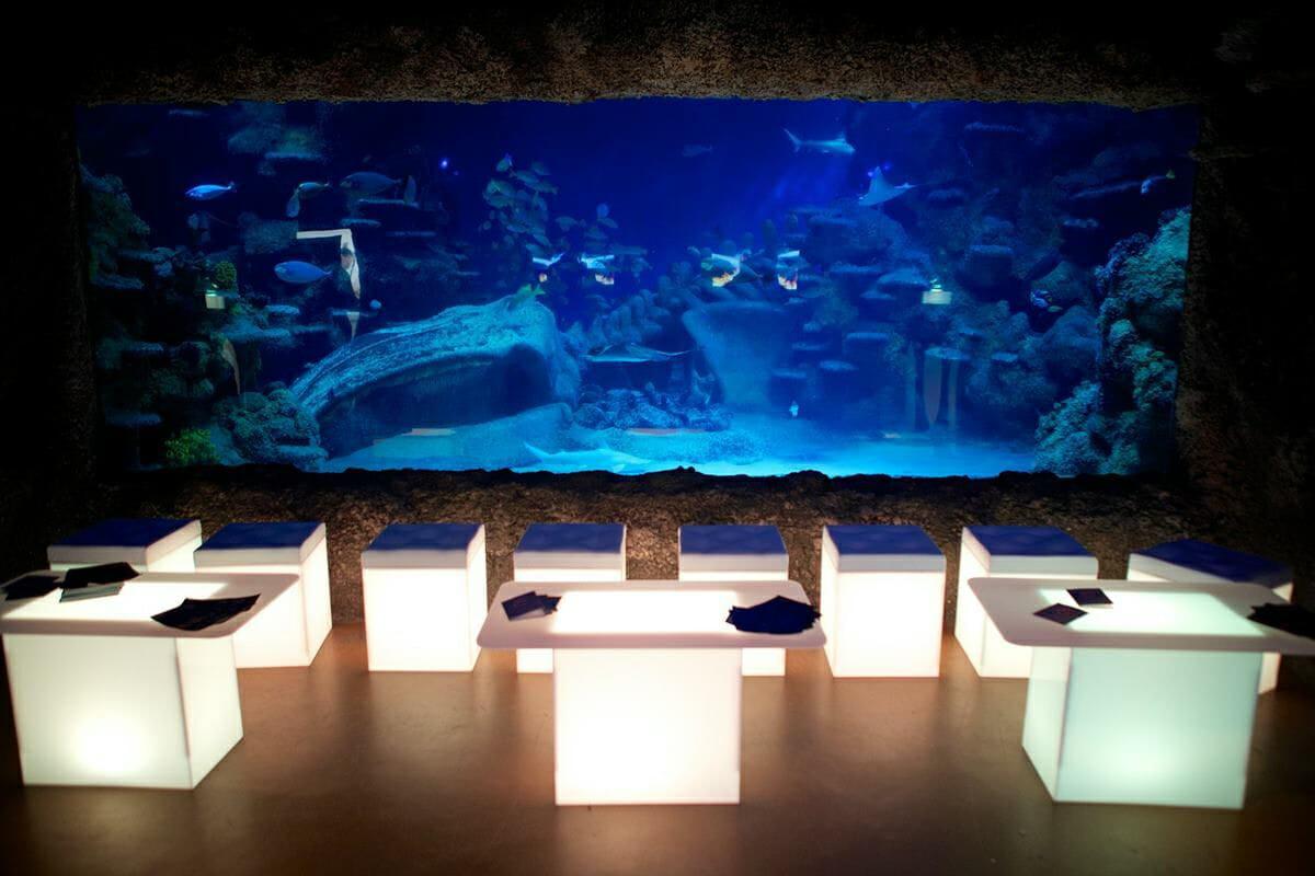 Aquarium lates valentine's