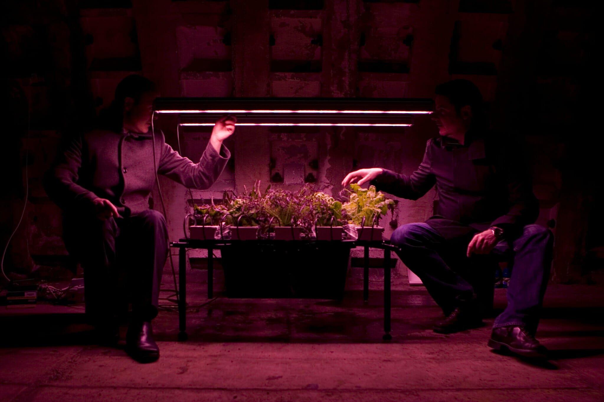 growing underground farm clapham